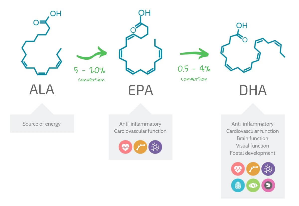 diagram showing how ALA gets converted into EPA and DHA