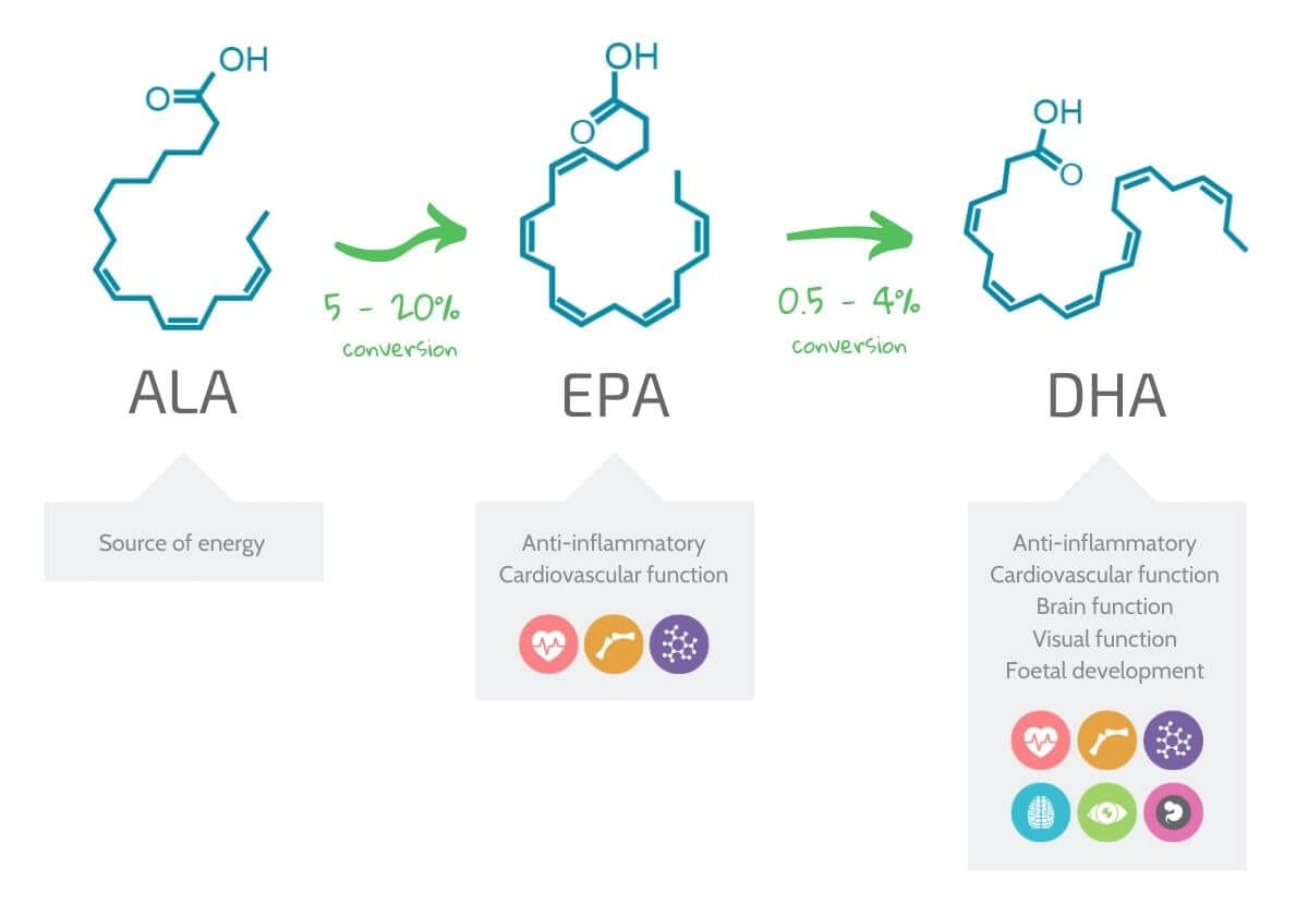 a diagram showing the poor conversion rate from ALA to EPA and DHA