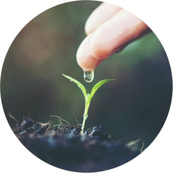 a hand watering a seedling