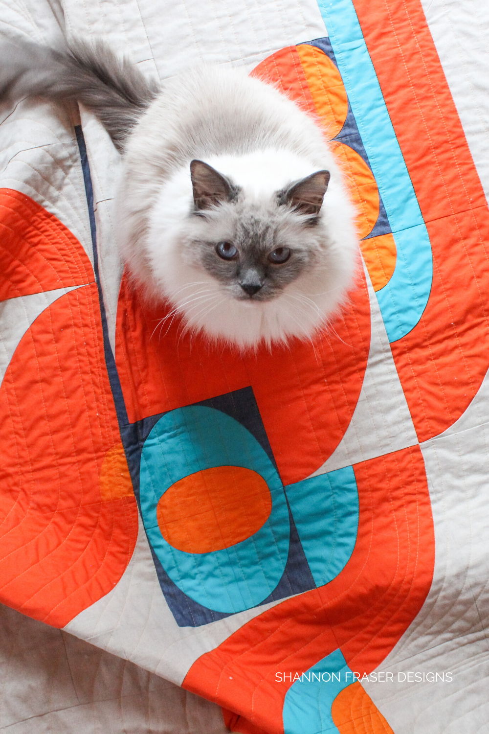 Pips sitting on the lap Cloud Surfing Quilt | Shannon Fraser Designs