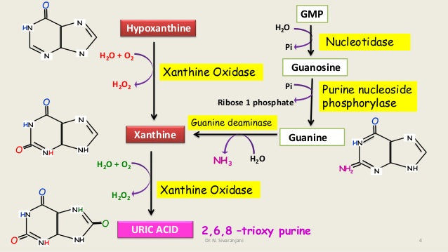 Purine life cycle | Purine and Uric acid | Gout Malaysia