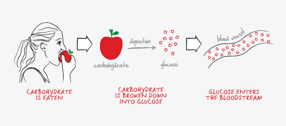 Carbs breaking down into glucose diagram