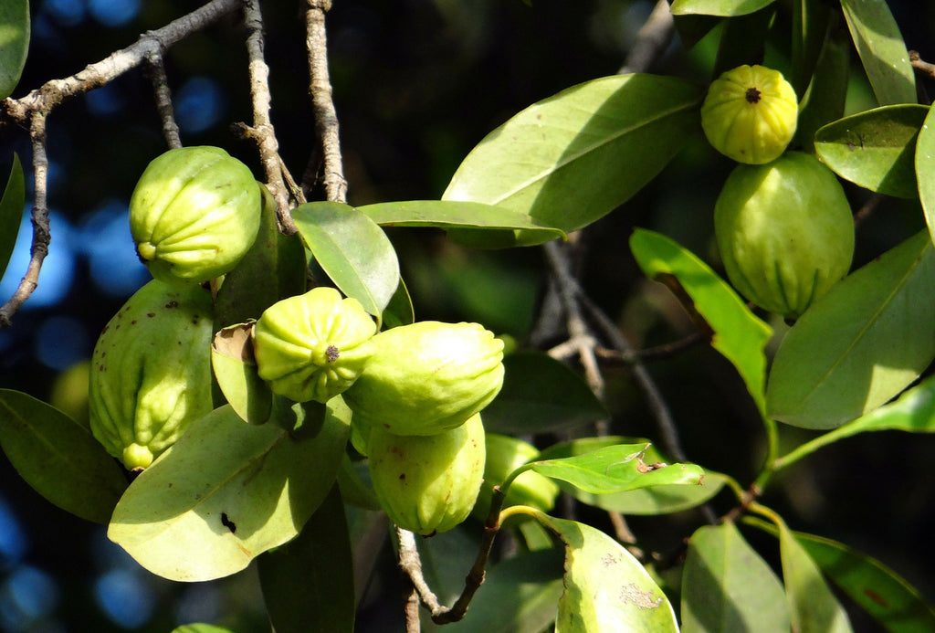 Does Garcinia Cambogia work? Malaysia Supplements review Vitamine Malaysia