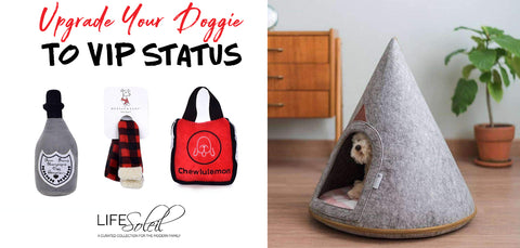 6 Products to Upgrade your Doggie to VIP Status