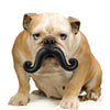 HUMUNGA STACHE SQUEAK FLOAT FETCH DOG TOY