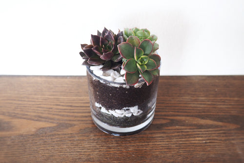 Mini Succulent Garden - 3 Assorted