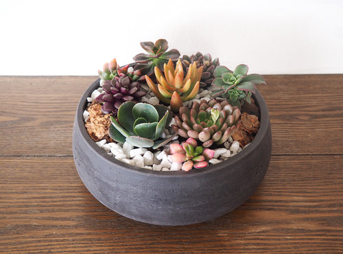 Succulent Garden - Colorful