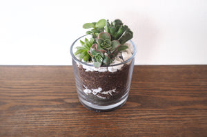 Mini Succulent Garden - 4 Assorted