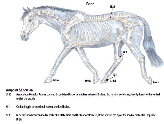 Acupressure for equine fear