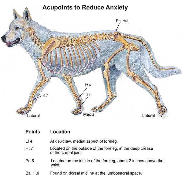 acupressure for anxious dog