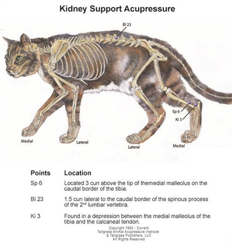 Feline kidney support with acupressure