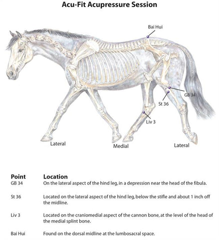 acupoints for equine fitness