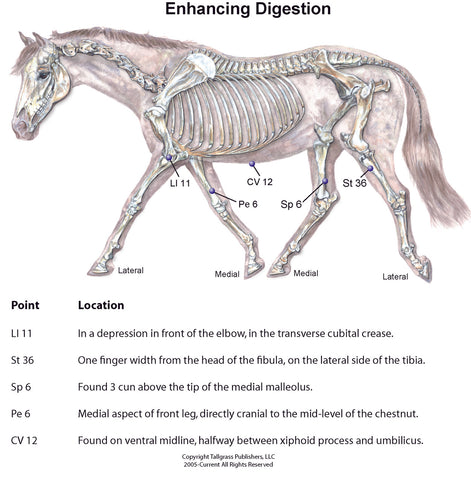 equine digestion and acupressure acupuncture