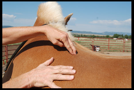 Equine acupressure and Tui Na