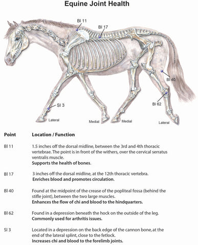 equine acupoints for arthritis