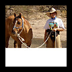 Equine Acupressure practitioner - Arizona
