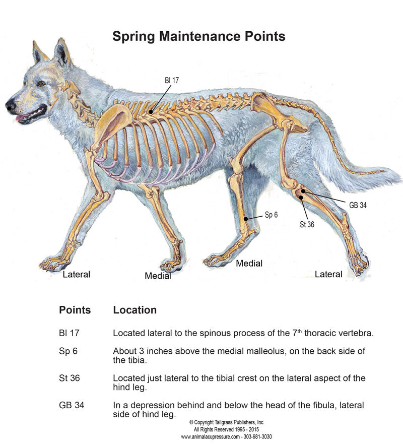 Label - Spring Training and Canine Acupressure