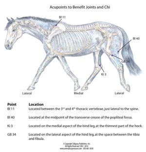 Acupressure points to benefit joints and Chi flow