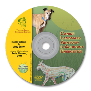 Canine Acupoint Energetics & Landmark Anatomy