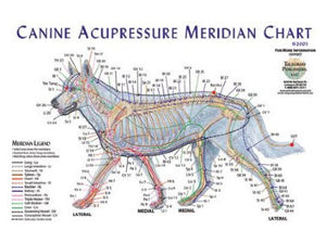 Canine Meridian Chart