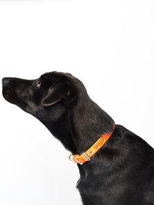 LindaRodin-Jimi-leash-collar-NYC