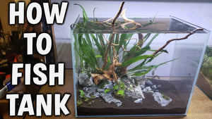 Step-By-Step Guide - Starting Your First Planted Aquarium!
