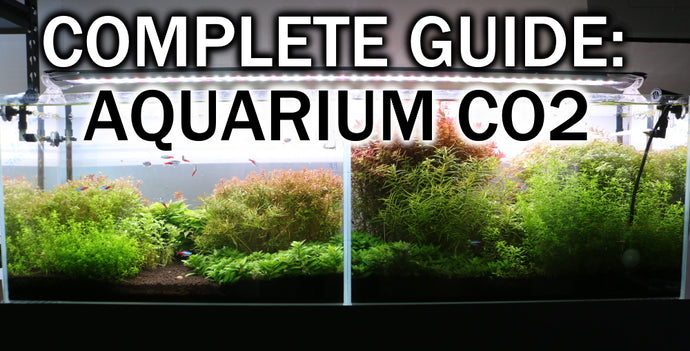 The Ultimate Guide To Using CO2 In The Planted Aquarium