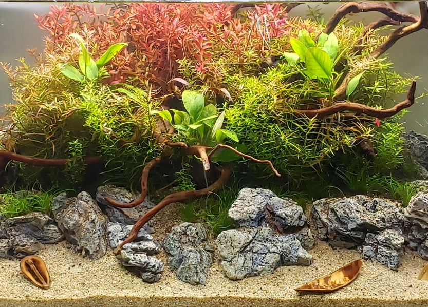8 Great Easy Beginner Aquarium Plants You Need To Try Aquapros