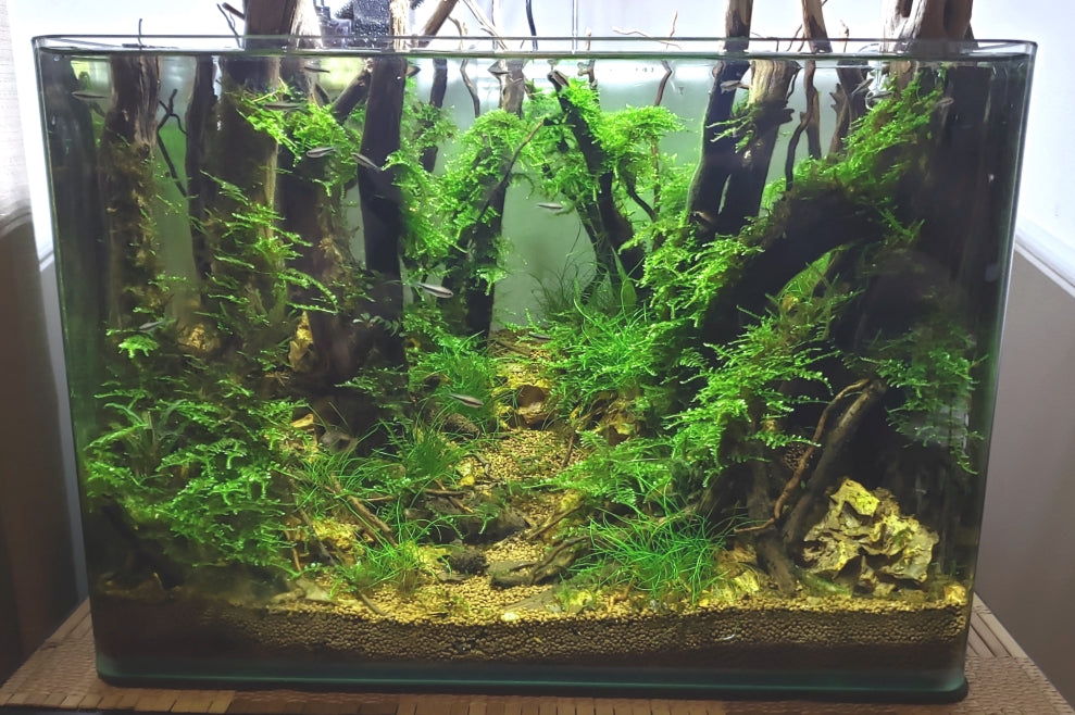 Step By Step Guide How To Create A Forest Style Planted Aquarium Aquapros