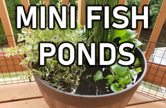 The Ultimate Guide To DIY Outdoor/Indoor Mini Fish Ponds | STEP-BY-STEP Tutorial