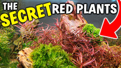 The Secret To Growing Red Aquarium Plants