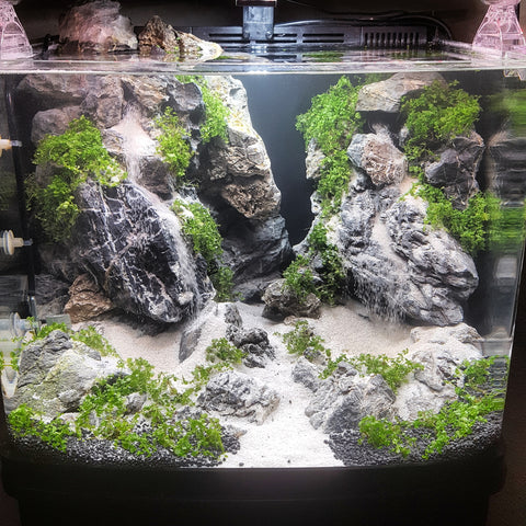 Top 5 Best All In One Aquarium Kits To Get Started In The Freshwater A Aquapros