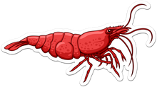 Load image into Gallery viewer, Cherry Shrimp Neocaridina Sticker - AQUAPROS