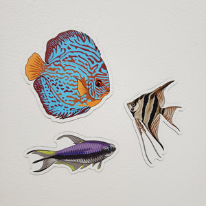 3 Pack Amazon Fish Stickers/Magnets/Clings - AQUAPROS