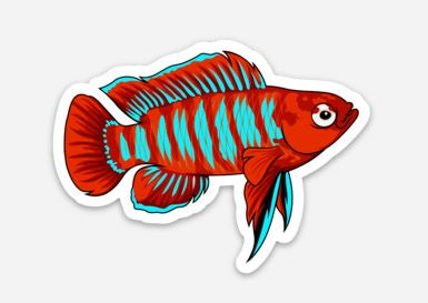 Scarlet Badis Sticker/Magnet/Cling - AQUAPROS
