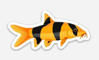 Clown Loach Sticker/Magnet/Cling - AQUAPROS