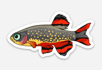 Galaxy Rasbora Sticker/Magnet/Cling - AQUAPROS