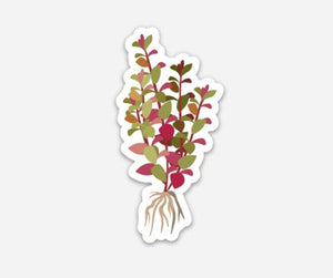 Ludwigia Plant Sticker - AQUAPROS