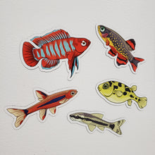 Load image into Gallery viewer, 5 Pack Nano Fish Stickers/Magnets/Clings - AQUAPROS