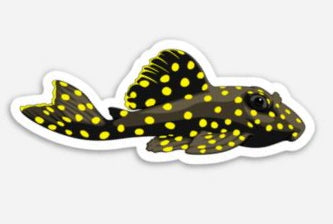 Gold Nugget Pleco Sticker/Magnet/Cling - AQUAPROS