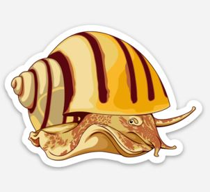 Nerite Snail Sticker/Magnet/Cling - AQUAPROS