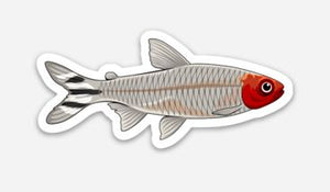 Rummy Nose Tetra Sticker/Magnet/Cling - AQUAPROS
