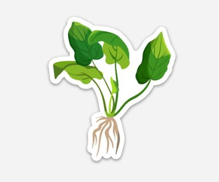 Amazon Sword Plant Sticker - AQUAPROS