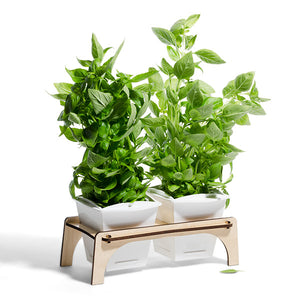 Windowsill Herb Planter and Stand