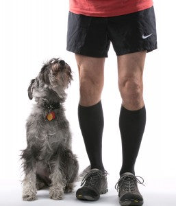Doggie Approved Compression Socks!