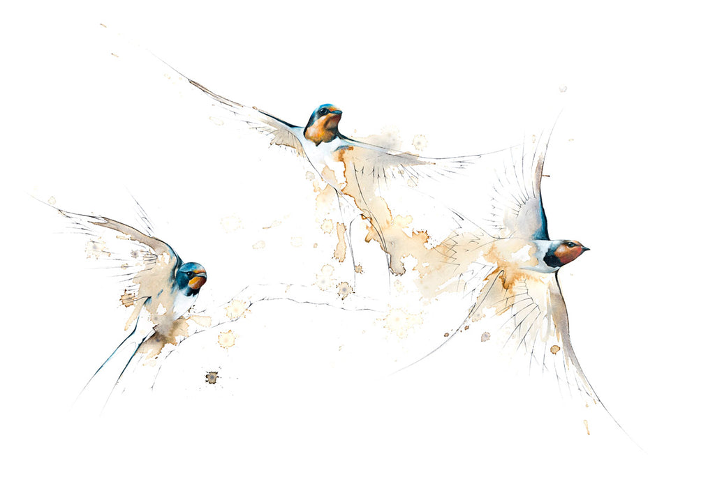 Three Swallows (original coffee & ink)