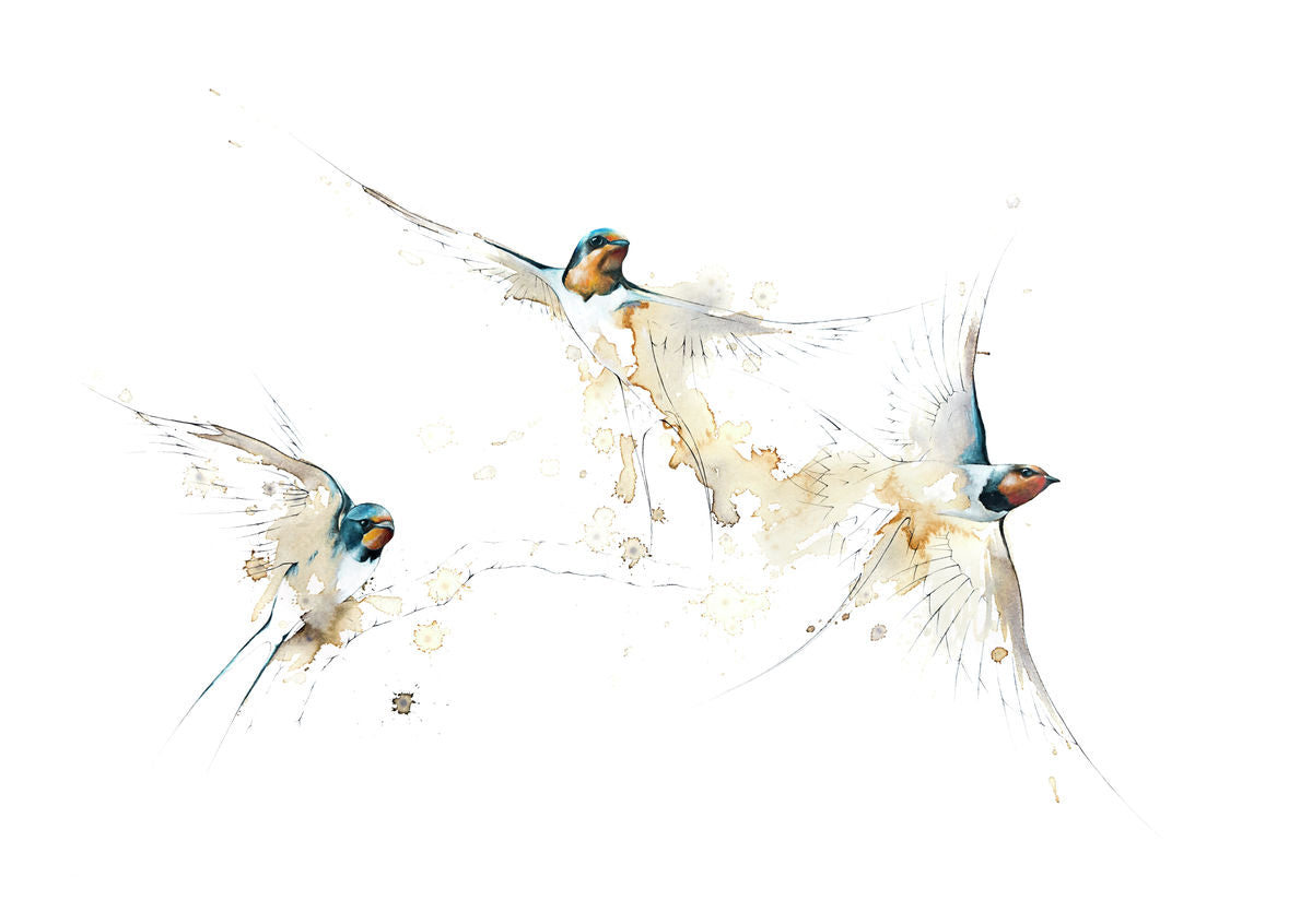 Three Swallows 1