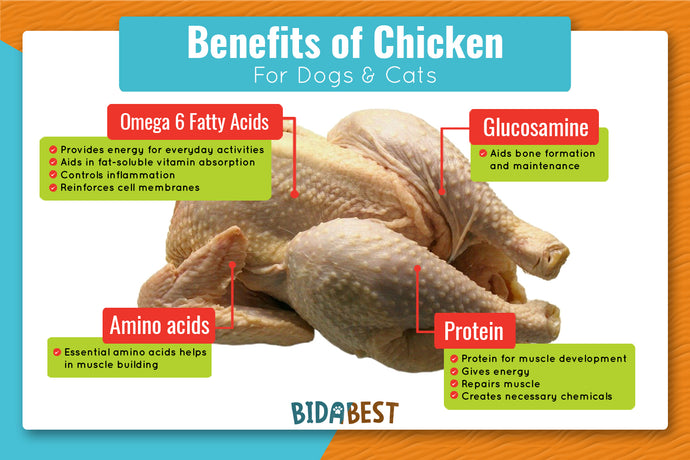 Is Chicken Good For Dogs And Cats?