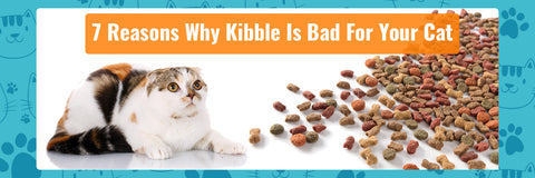 7 Reasons Why Dry Pellet Food Or Kibble Is Bad For Your Cat