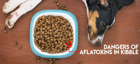 Dangers of Aflatoxins in Kibble